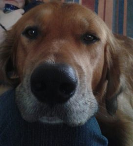 Vores hund